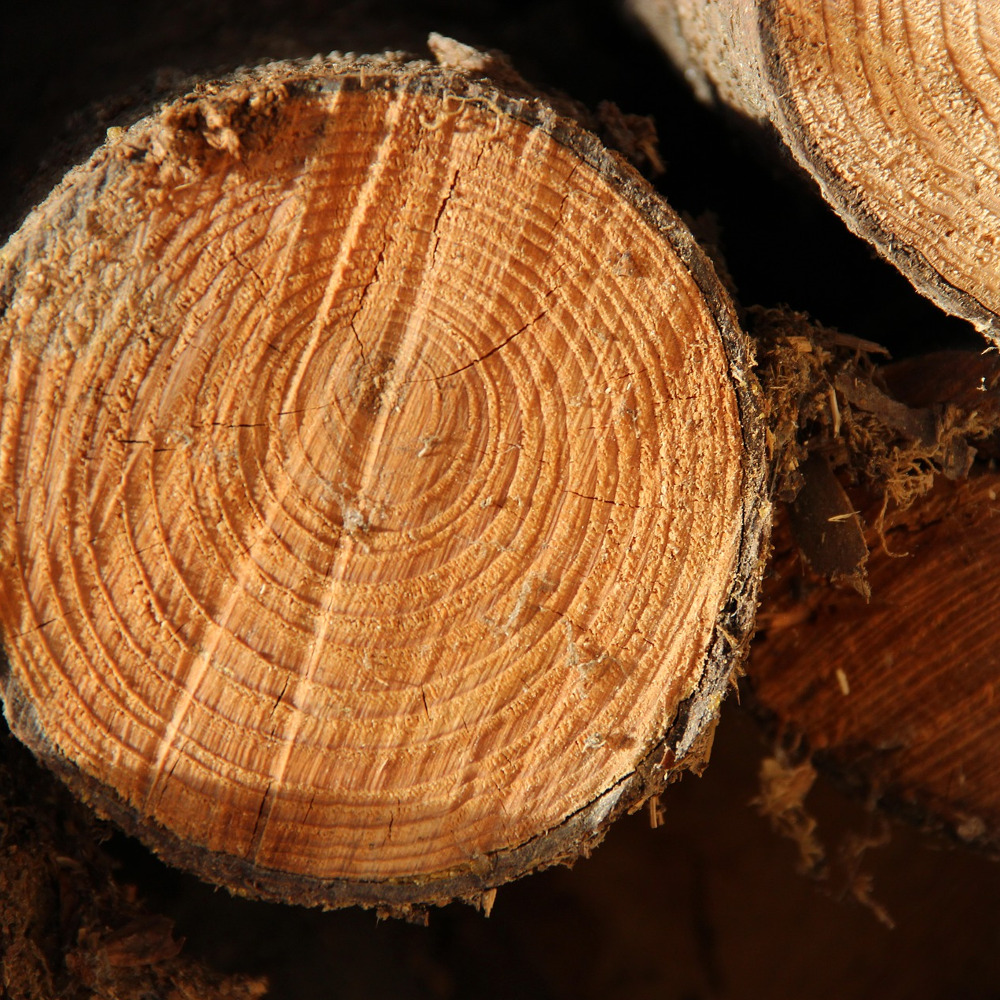 le bois, une source d'énergie à optimiser